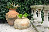 Terracotta-Gefäße mit Aloe und Rosetten-Dickblatt
