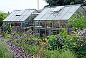 Gewächshäuser hinter Beeten mit Akelei und Lavendel