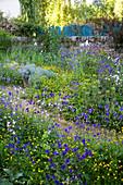 Blau gelbe Frühlingsbeete mit Akelei und Butterblumen