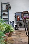 Terrasse im Shabby-Stil mit alter Holzleiter, Pflanzen und Katze