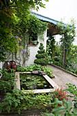 Terrasse mit Teichbecken, Buchs Topiary und Kletterrose