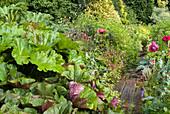 Naturgarten mit Schildblatt, Kreuzkraut und Schlafmohn