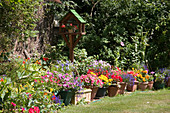 Buntes Topf-Arrangement mit Sommerblumen