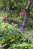 Naturgarten mit Zierlauch, Funkien, Lupinen und Pfingstrosen