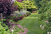 Rasen und Beet mit Storchschnabel 'Biokovo' und Pfingstrosen