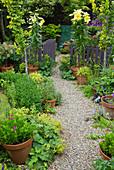 Garten mit Stauden, Kiesweg und Gartenzaun mit Gartentor, blühende Lilien 'Golden Splendor' im Topf