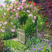 Rose am Rosenbogen, Storchschnabel und Fingerhut im Beet