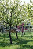 Hängematte zwischen blühenden Apfelbäumen