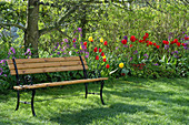Bank unterm Baum am Frühlingsbeet mit Tulpen