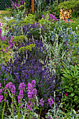 Beet mit Lavendel, Ziest und Kugeldistel