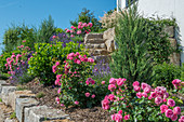 Hanggarten mit Lavendel und Rosen