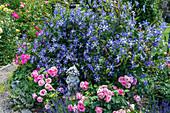 Rosen und Klematis 'Juuli' mit Gartengnom