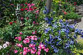 Rosen und Klematis 'Juuli' mit Blumenelfe