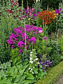 Sommerbeet mit Phlox, Glockenblumen, Stockrosen und Sonnenbraut