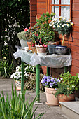 Töpfe mit Kübelpflanzen am Gartenhaus