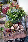 Herbst-Schale mit Drahtwein, Besenheide, Greiskraut und Purpurglöckchen
