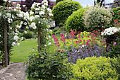 Kletterrose Schneewittchen am Rosenbogen, Frauenmantel, Katzenminze und Spornblumen im Beet