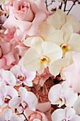 Rosen und Phalaenopsis