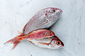 Three uncooked red fish lying on marble tabletop