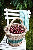 Kirschen im Korb auf Gartenstuhl