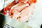 Frische Red Snapper auf Eis in Metallschale auf einem Markt