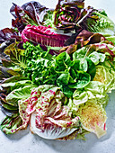 Various types of leafy lettuce