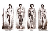 The human form, 1902 illustration
