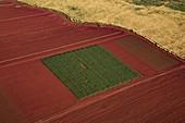 Fields of genetically modified crops, Hawaii