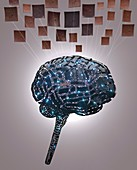 Digital human brain and neurons, illustration