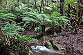 Rainforest stream, Australia