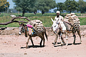 Mud brick industry