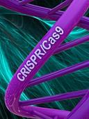 DNA model with CRISPR-Cas9 text, illustration