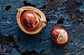 Horse chestnuts (Aesculus hippocastanum)