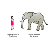 Woman in high heels and elephant, illustration