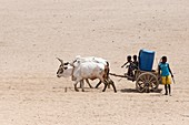 Water collection in arid Madagascar