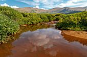 Stream in the Colorado Rockies