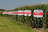 Genetically modified corn farm, USA