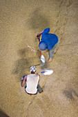 Workers shoveling arabica coffee beans, Ethiopia