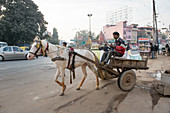 Man steering a horse-drawn cart, Agra, India