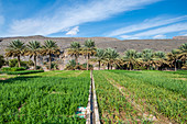 Date farm, Wadi Ghul, Oman