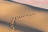 Tracks in sand dunes, Liwa Oasis, Abu Dhabi, UAE
