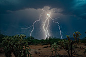 Lightning strikes, Arizona, USA