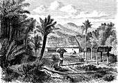 Tobacco farming, 19th Century illustration