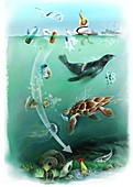 Environmental impact of plastics pollution, illustration