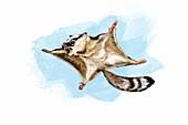 Volaticotherium prehistoric gliding mammal, illustration
