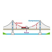 Suspension bridge, illustration