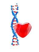 DNA strand with red heart, illustration