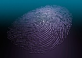 Human fingerprint, illustration