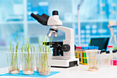 Agriculture research, conceptual image