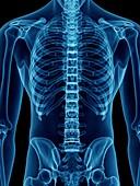Illustration of a man's skeletal back